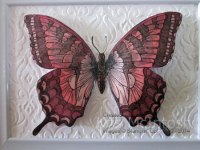Framed-Butterfly-1