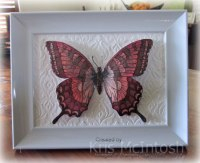 Framed-Butterfly-2